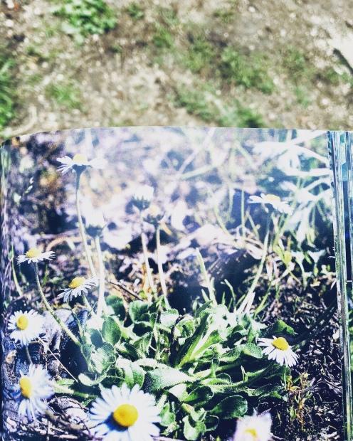 Flore des friches urbaines