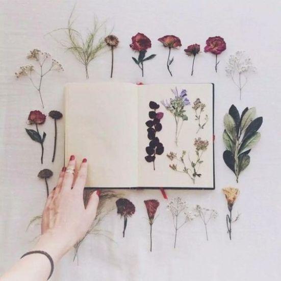 Herbier de fleurs