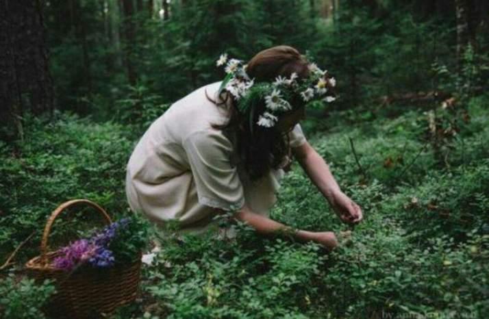 Forest medicine