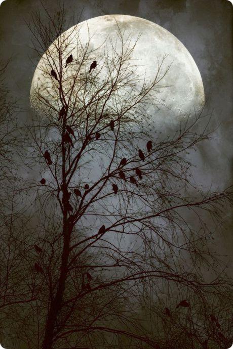 Lune de la Corneille