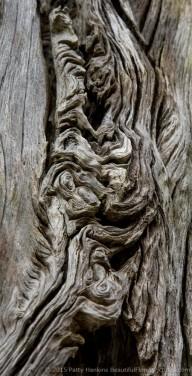 2015_04_wormsloe_tree_texture_2871